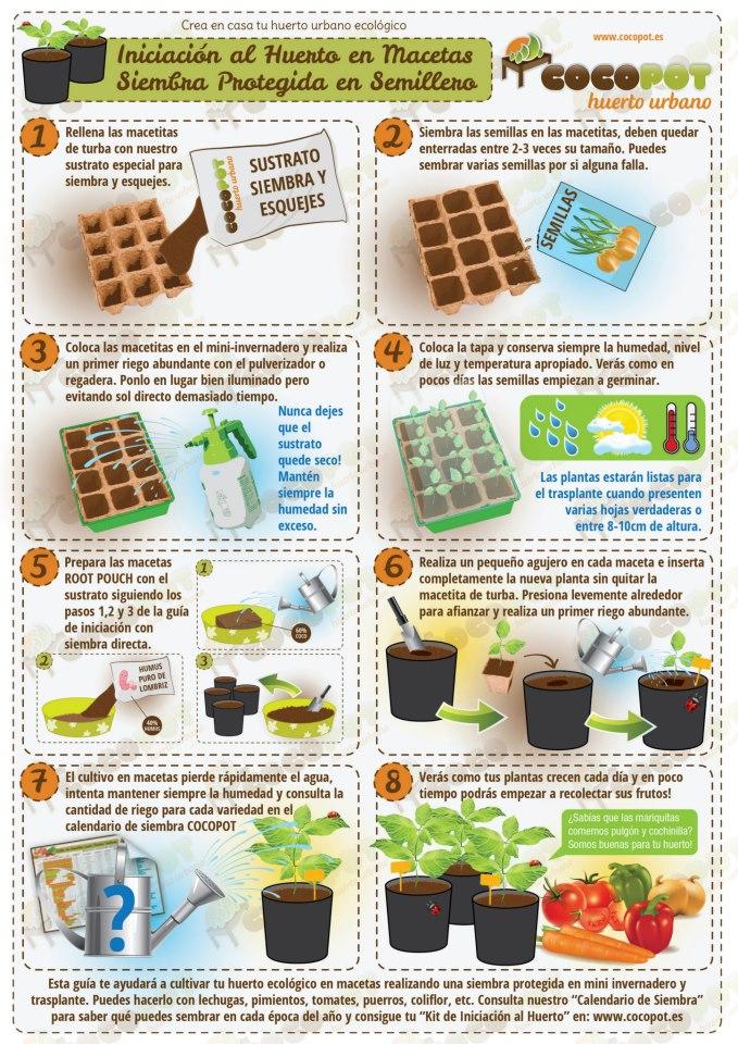 Pasos siembra organica santyaap2000 for Plantas hortalizas ejemplos